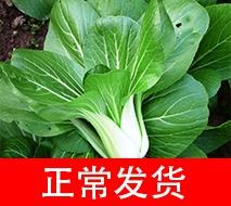 优质蔬菜 上海青 一斤装 (本店铺蔬菜满50元同城免费送) 500g