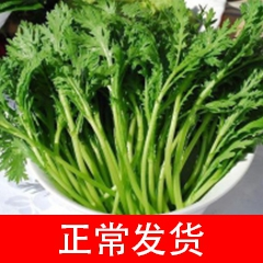新鲜 茼蒿菜 一斤装(本店铺蔬菜满50元同城免费送) 500g