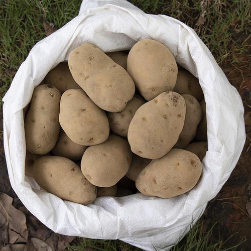 高山土豆 1斤装