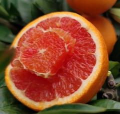 云阳红橙顺丰包邮 10斤