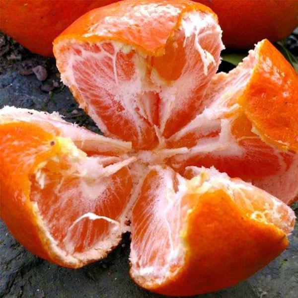 巴阳正宗土红橘5斤30元包邮