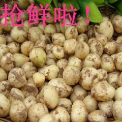 陈幺妹新鲜农家野生蔬菜九母子小蒜苦芥苦藠小洋葱薤白头500克