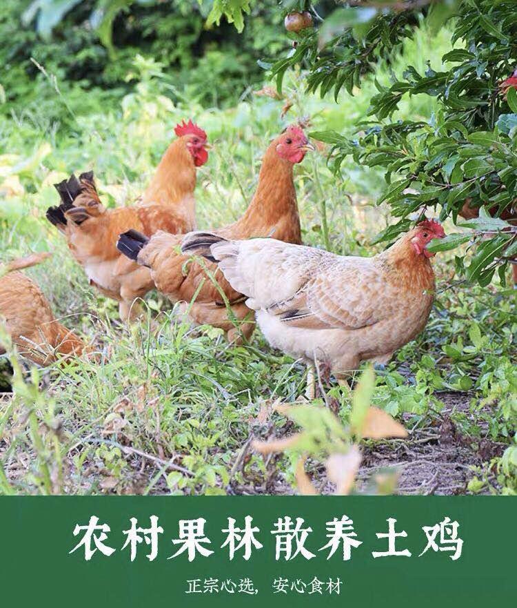 正宗农家土鸡 0.5KG
